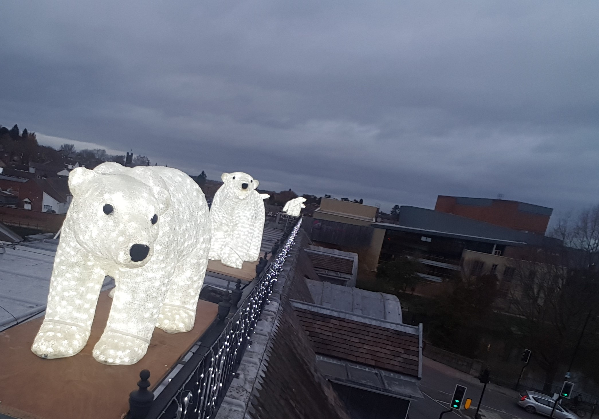 Polar bears arrive early with Christmas cheer